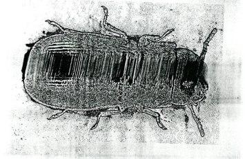 kafka-art-of-bug